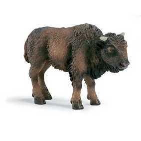 Bufalo Bison jovem (Bisão)