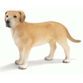 Cão da raça Labrador 16386 (Schleich do Brasil) Dog Labrador Male
