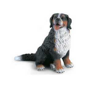 Cão Montanhês Bernese sentado - 16316