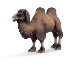 Camelo - 14348