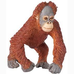 Filhote de Orangotando pintado a mão