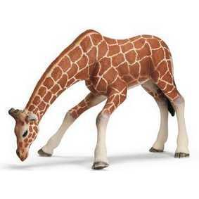 Girafa fêmea bebendo - 14390