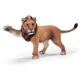 Leão jovem - 14374