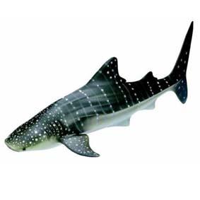 Tubarão baleia 16089 (Schleich Toys 2011) Whale Shark