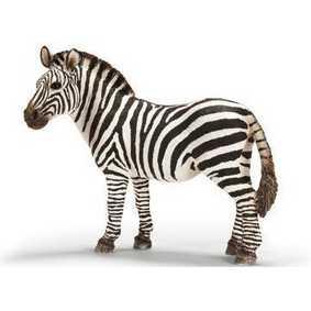 Zebra fêmea - 14392