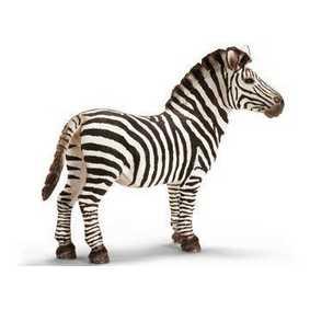 Zebra macho - 14391